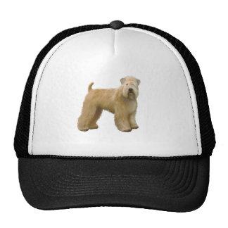 Terrier blond comme les blés doucement enduit (a) casquette de camionneur