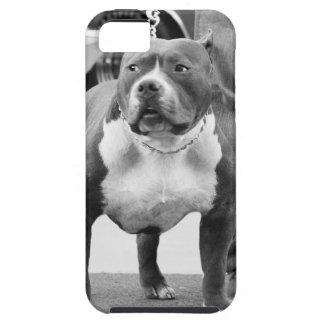 Terrier de Staffordshire américain Étui iPhone 5