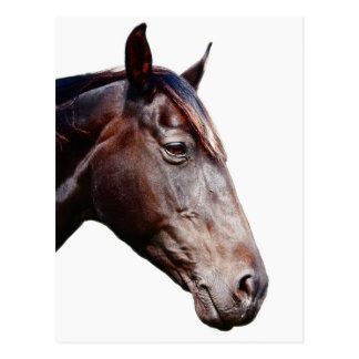 T te cheval cartes postales - Image tete de cheval ...