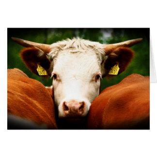 Tête de vaches carte de vœux