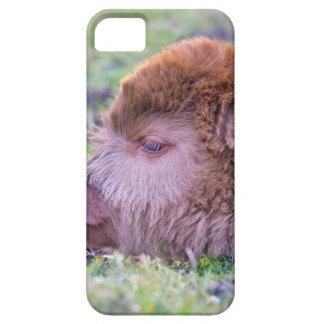 Tête de veau écossais nouveau-né brun de coques iPhone 5