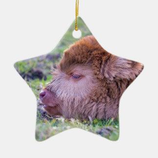 Tête de veau écossais nouveau-né brun de ornement étoile en céramique