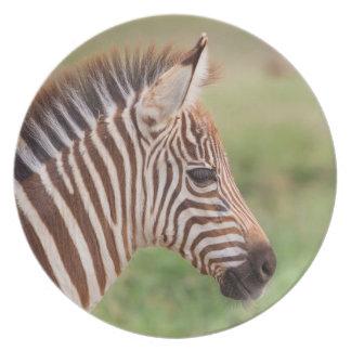 Tête de zèbre de bébé, Tanzanie Assiette