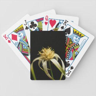 Tête d'un whitetop de starrush, colorata de jeu de cartes