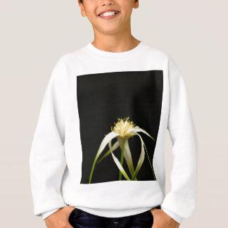Tête d'un whitetop de starrush, colorata de sweatshirt