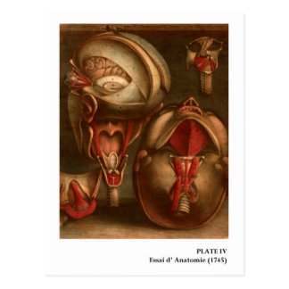 Tête vintage et cou de l'anatomie   carte postale