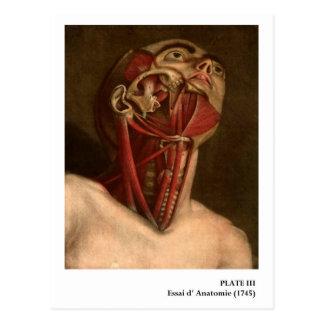 Tête vintage et cou de l'anatomie   cartes postales