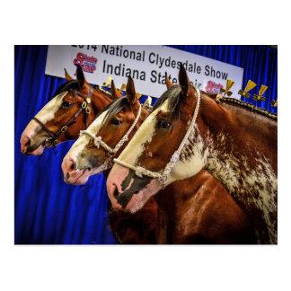 Têtes du cheval de fer 3 carte postale