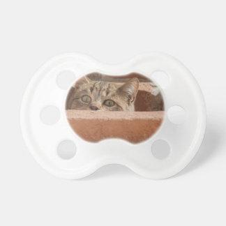 Tétine Chat sauvage curieux d'attention des plots
