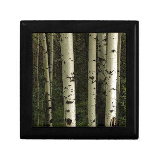 Texture d'un portrait de forêt boîte à souvenirs