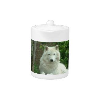 Théière arctique de loup