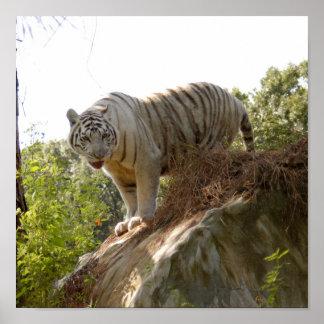 Tigre blanc 013 poster