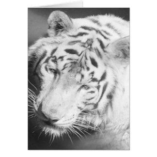 Tigre blanc 2 cartes