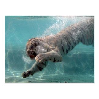 Tigre blanc allant pour la prière carte postale