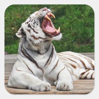 Tigre blanc, autocollant de tigre de Bengale
