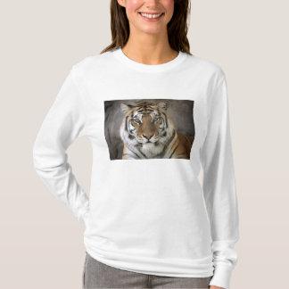 tigre captif, sanctuaire de zoo de ville de t-shirt