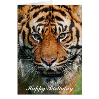 Tigre - carte de voeux de joyeux anniversaire
