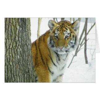 Tigre CUB dans la neige jetant un coup d'oeil Carte De Vœux