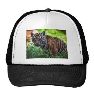 Tigre CUB de Sumatran de locations Casquette Trucker