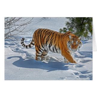 Tigre dans la carte profonde de vacances de neige