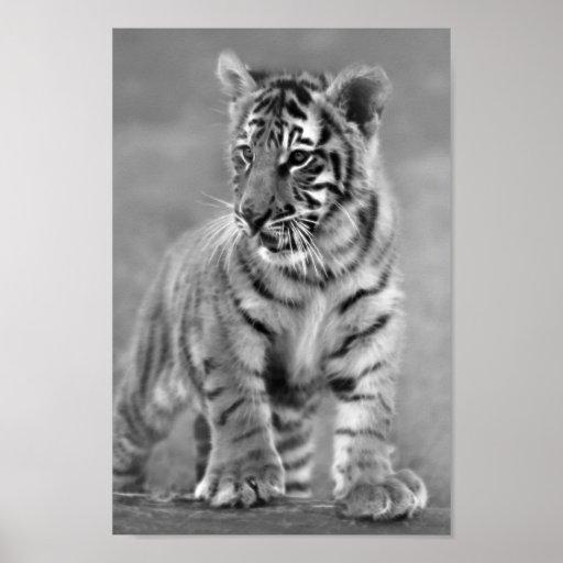 tigre de b b en noir et blanc poster zazzle. Black Bedroom Furniture Sets. Home Design Ideas
