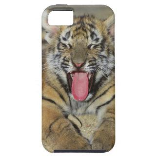 Tigre de Bengale baîllant Coques Case-Mate iPhone 5