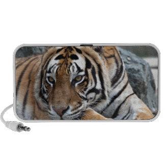 Tigre de Bengale dans l'herbe Haut-parleurs Portables