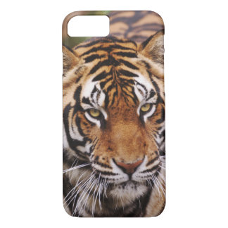 Tigre de Bengale, Panthera le Tigre Coque iPhone 7