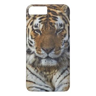 Tigre de Bengale, Panthera zoo du Tigre, Coque iPhone 7 Plus