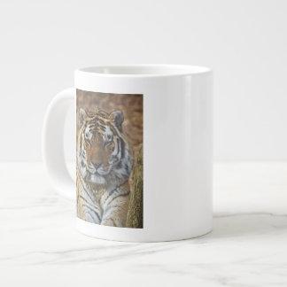 Tigre de Bengale, Panthera zoo du Tigre, Mug