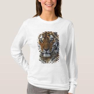 Tigre de Bengale, Panthera zoo du Tigre, T-shirt