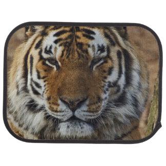 Tigre de Bengale, Panthera zoo du Tigre, Tapis De Sol