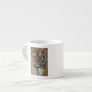 Tigre de Bengale, Panthera zoo du Tigre, Tasse Expresso