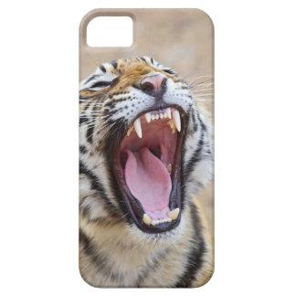 Tigre de Bengale royal baîllant, ressortissant de Coque iPhone 5 Case-Mate