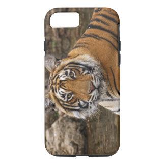 Tigre de Bengale royal dans l'étang de jungle, Coque iPhone 7