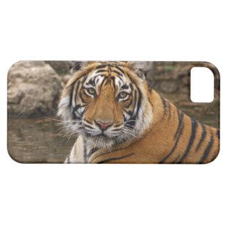 Tigre de Bengale royal dans l'étang de jungle, iPhone 5 Case