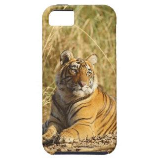 Tigre de Bengale royal en dehors de la prairie, Étuis iPhone 5