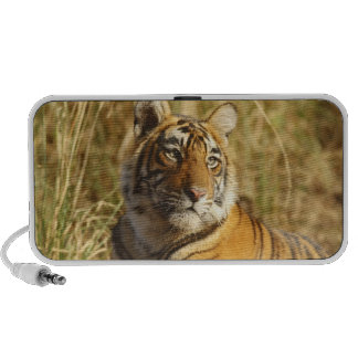 Tigre de Bengale royal en dehors de la prairie, Haut-parleurs Notebook