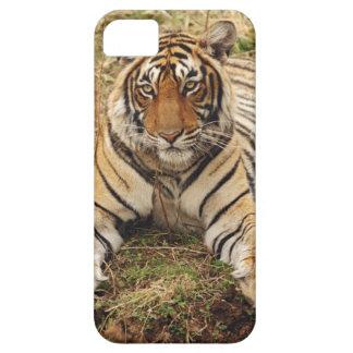 Tigre de Bengale royal, parc national de Coques iPhone 5 Case-Mate