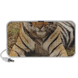 Tigre de Bengale royal, parc national de Ranthambh Haut-parleur Ordinateur Portable