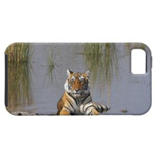 Tigre de Bengale royal se reposant dans le lac Coques iPhone 5