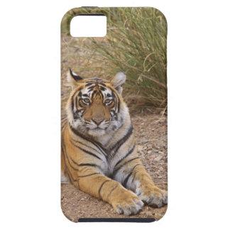 Tigre de Bengale royal se reposant en dehors de la Coques Case-Mate iPhone 5