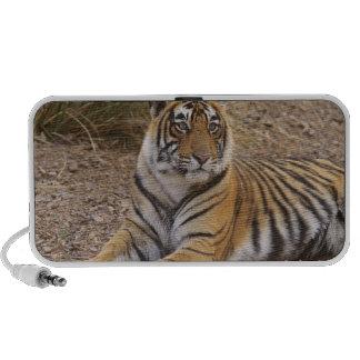 Tigre de Bengale royal se reposant en dehors de la Haut-parleur Mp3