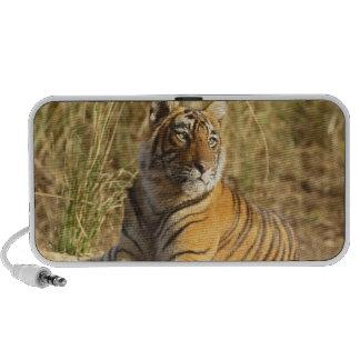 Tigre de Bengale royal se reposant en dehors de la Haut-parleurs Portables