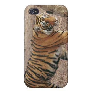 Tigre de Bengale royal sortant de la région boisée Étui iPhone 4