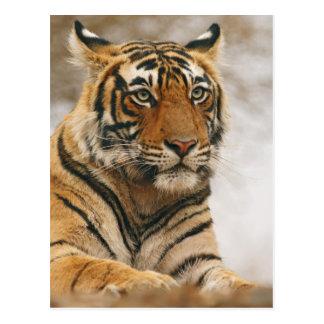 Tigre de Bengale royal sur la roche, Ranthambhor Carte Postale
