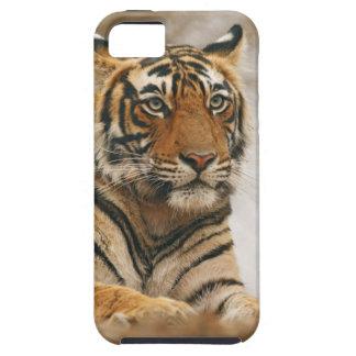 Tigre de Bengale royal sur la roche, Ranthambhor Étui iPhone 5