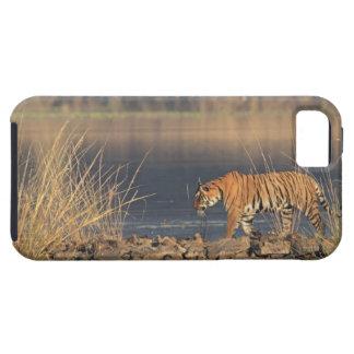 Tigre de Bengale royal sur le mouvement, Coque Case-Mate iPhone 5