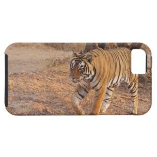 Tigre de Bengale royal sur le mouvement, Coque iPhone 5 Case-Mate