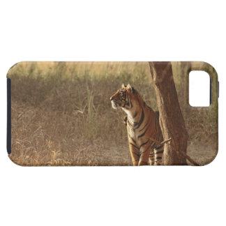 Tigre de Bengale royal sur le regard pour la Coque iPhone 5